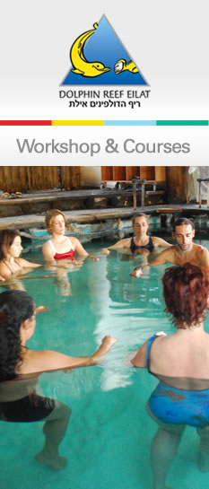 Workshop & Courses