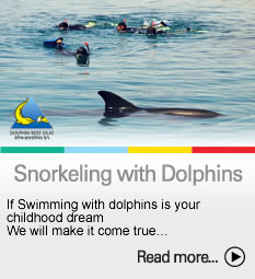 To the Snorkeling with dolphins page