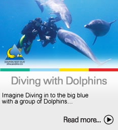 To the Diving with dolphins page