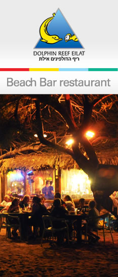 beach bar restaurant